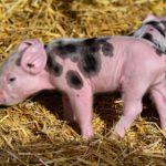 Cererea de despăgubiri pentru crescătorii de animale