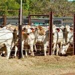 UE a interzis României să mai exporte carne de porc